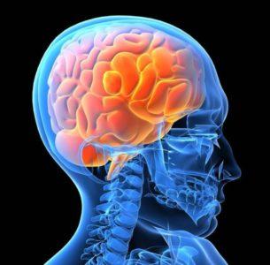 14 интересных фактов о мозге человека