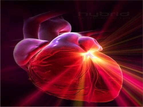 Интересные факты о сердце человека