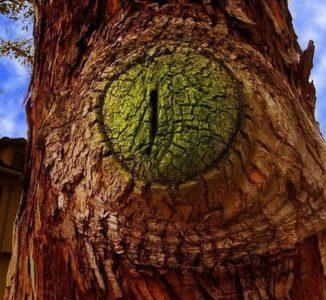Деревья-убийцы