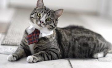 Почему нужно заводить кошку