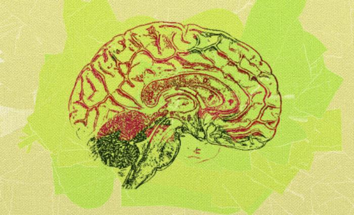 Как можно видеть динамику мозговых структур?