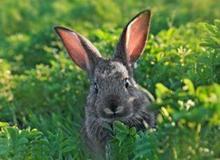 Интересное о животных и растениях