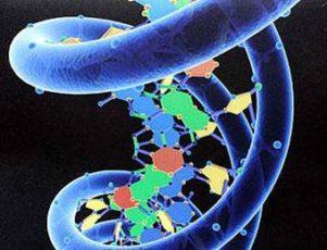 Генетическая палитра мозга