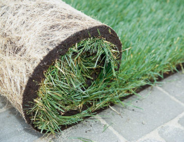 Какие бывают газоны, и какой из них выбрать?
