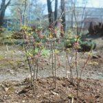 Почему могут скудно цвести: деревья, кустарники и цветы?