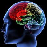 Языки мозга