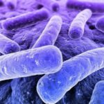 Бактерии прокормят!