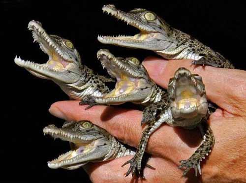 Крокодилы из электроцентрали