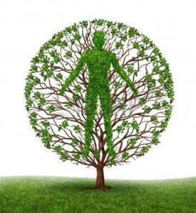 Дерево без веток