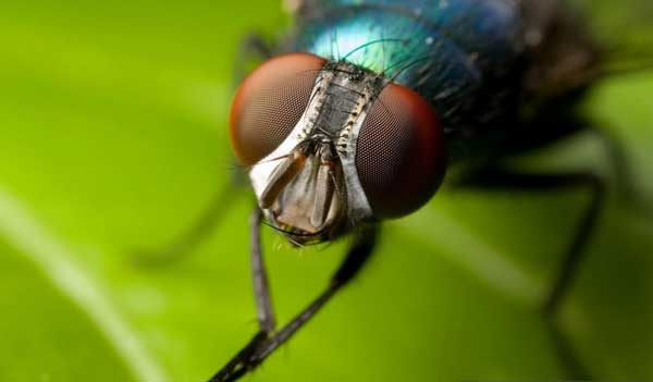 Как Африке избавились от мухи цеце?