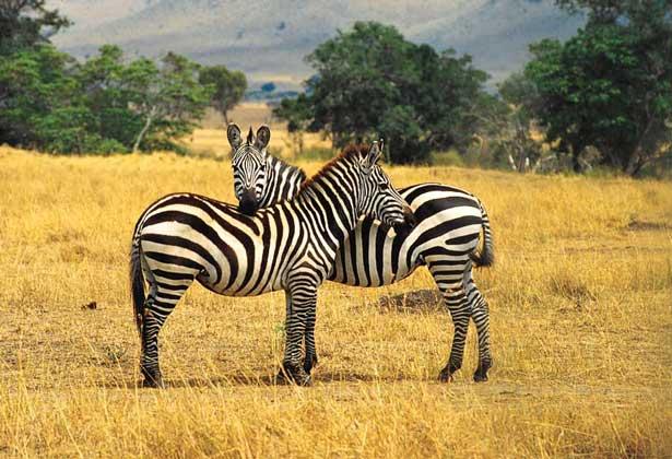 Передача информации между особями животных