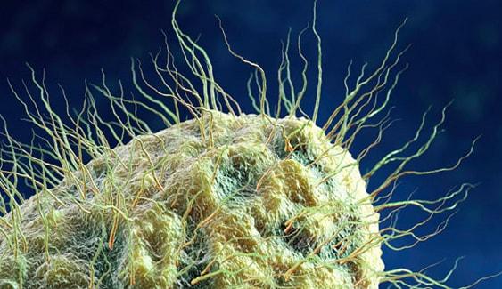 Внешний вид бактерии