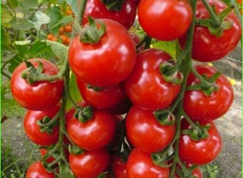 Как правильно выбирать помидоры?