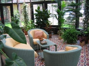Домашние растения и фен-шуй