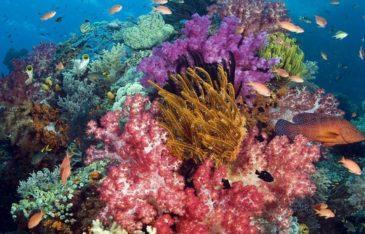 Коралловые полипы интересные факты