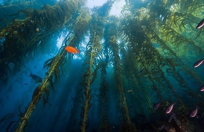 Интересные водоросли