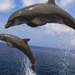 Дельфины – интересные факты для детей и взрослых