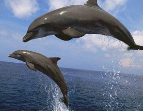 Дельфины – интересные факты для детей