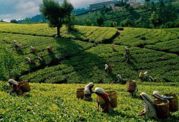 Интересные факты о Шри Ланке
