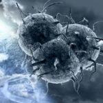Вирусы интересные факты
