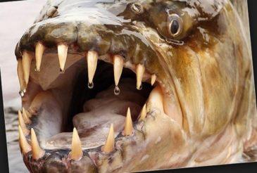 Основные сведения о реке Амазонке