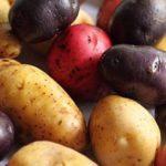 Картофель и самые интересные факты