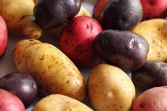 Интересные факты о картошке