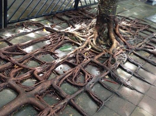 Интересные факты о корнях растений
