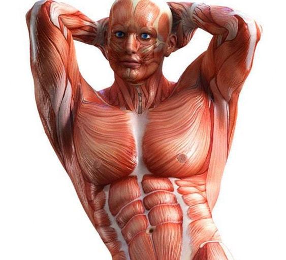 Прикольные картинки мышцы, флеш
