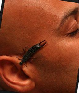 Что будет если таракан залезет в ухо?