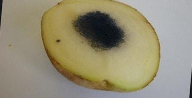 Что будет, если на картошку капнуть йод?