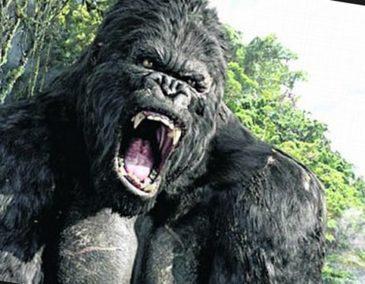 Какая обезьяна самая большая?