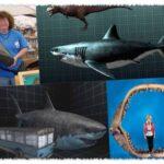 Самая большая акула в мире — мегалодон