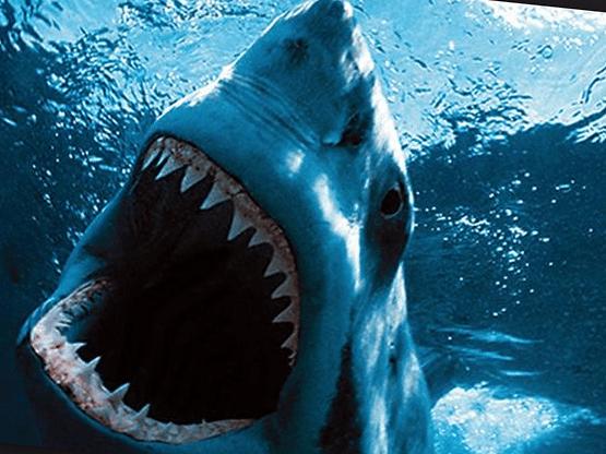 Самая большая белая акула в мире