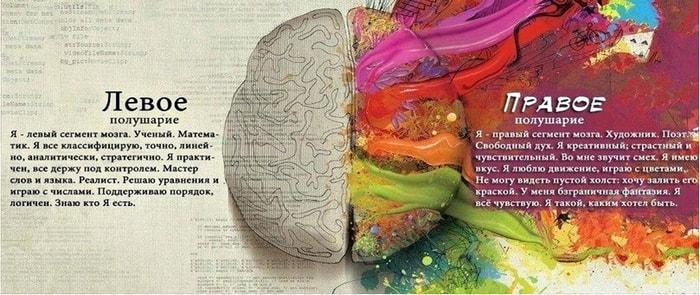 Какое полушарие мозга за что отвечает
