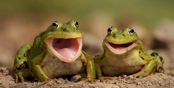 Общение лягушек