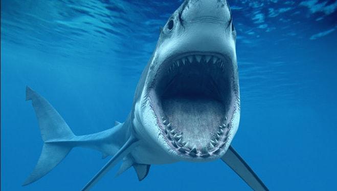 Кархародон - большая белая акула
