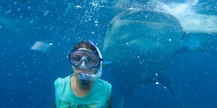 Селфи с китовой акулой