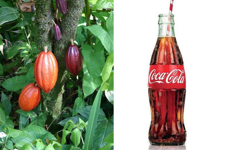 Форма бутылки это отсылка к плоду дерева какао