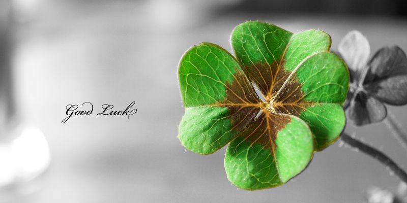 Удача поможет выиграть в лотерею крупные деньги